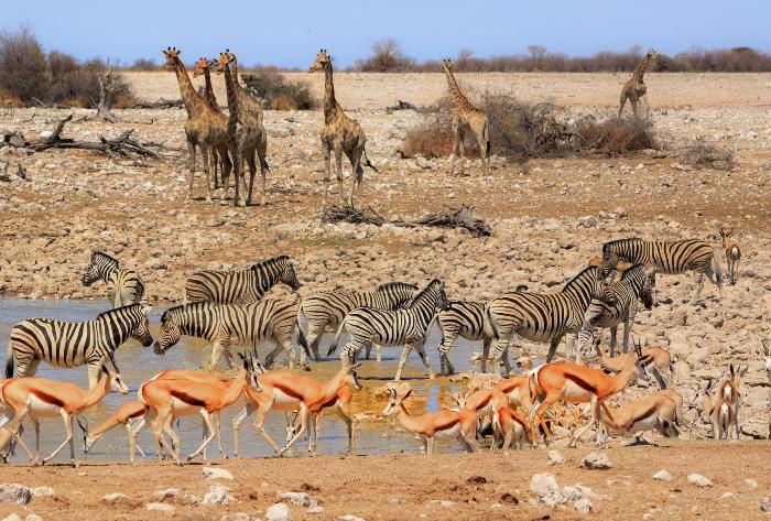 Namibia (Etosha National Park) - The best places to photograph the world