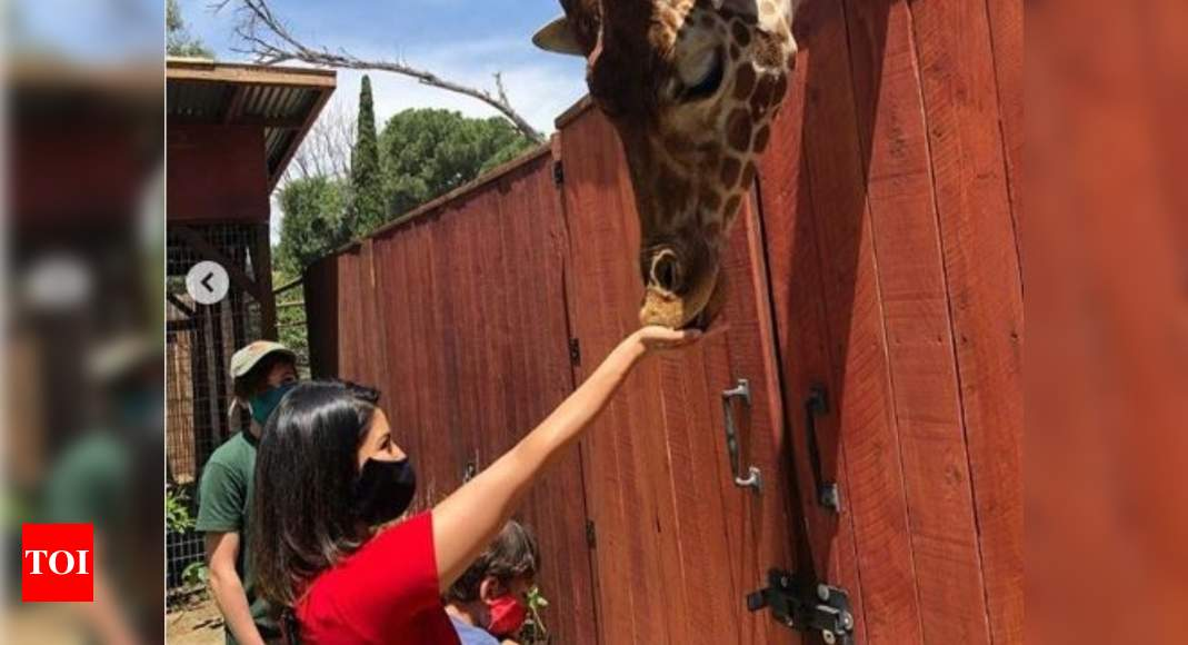 Sunny Leone feeding a giraffe in the latest post